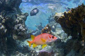 Bora Bora reef scene