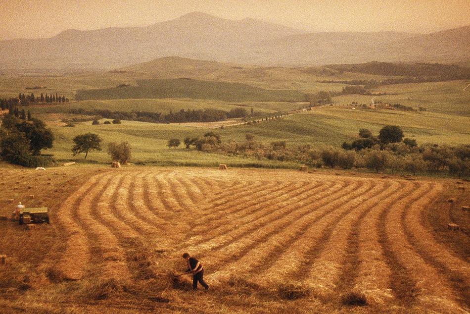 Harvesting hay, Pienza, Tuscany, Italy