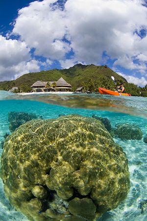Coral ball in Moorea