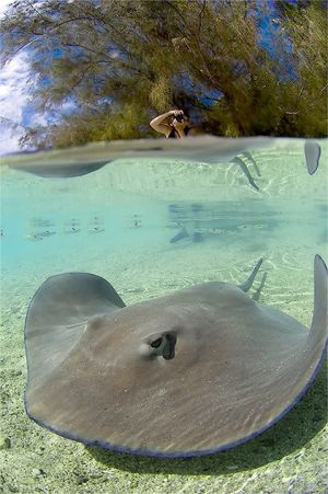 Polynesia-53.jpg