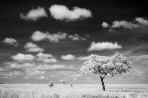 SerengetiPlain