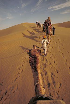 Thar Desert Camel Caravan