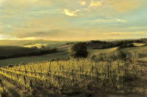 Il Paradisio Vineyard, Tuscany